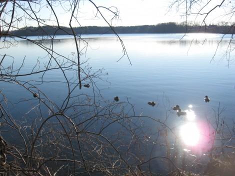 Fresh Pond