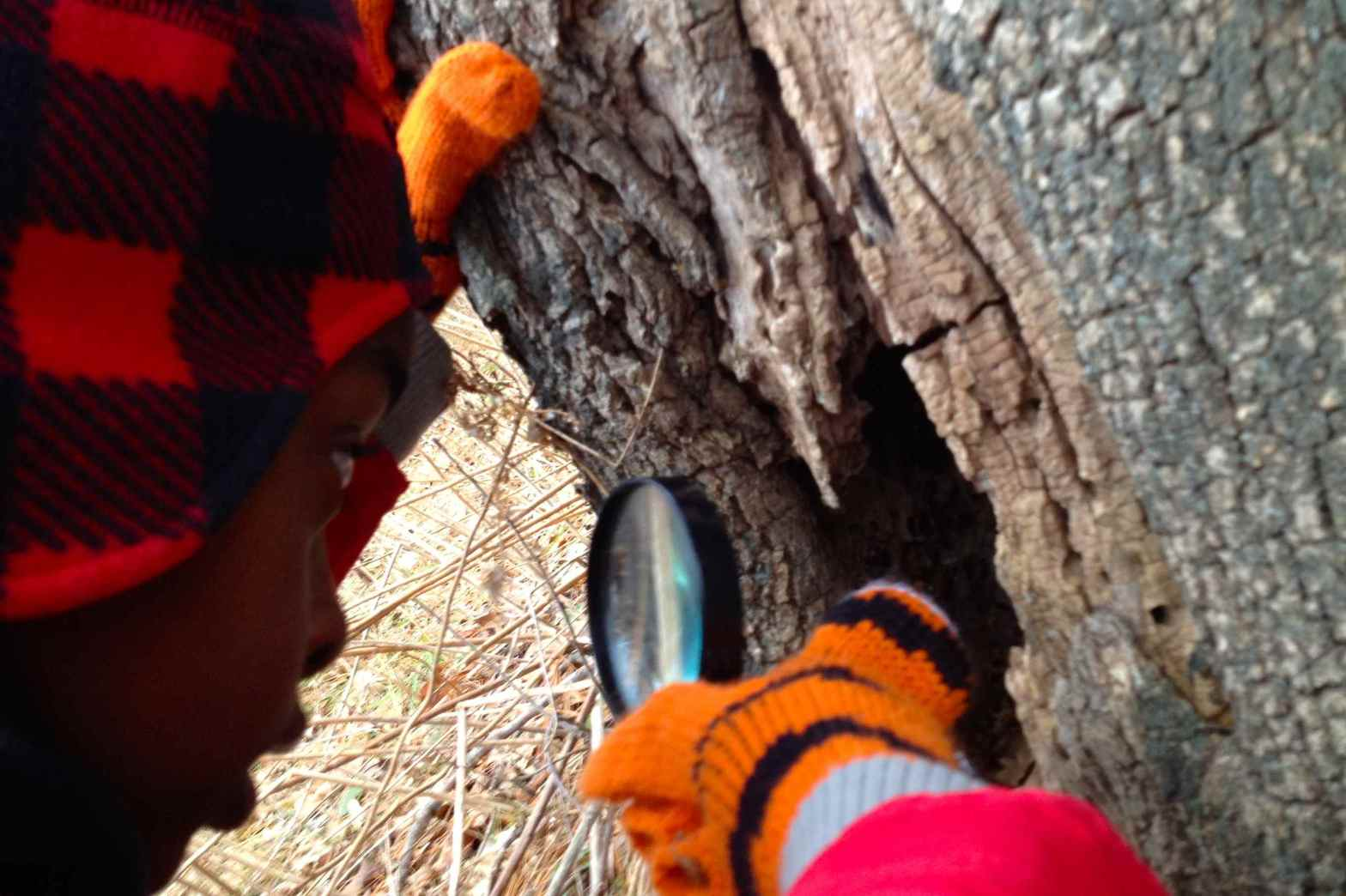 boy using magnifier to examine tree crevice