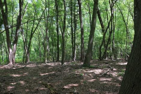 Regional Floodplain Forest for Arlington, Belmont, and Cambridge Massachusetts