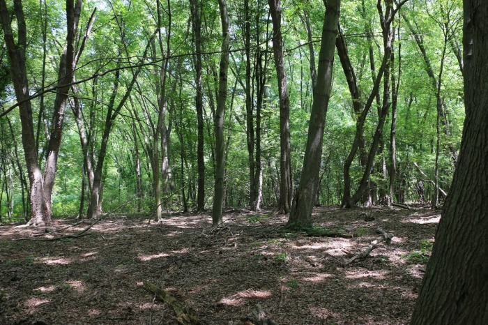 Regional Floodplain Forest for Arlington, Belmont, and Cambridge Massachusetts