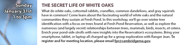 Information about the Secret Life of White Oaks walkabout at Fresh Pond Reservation