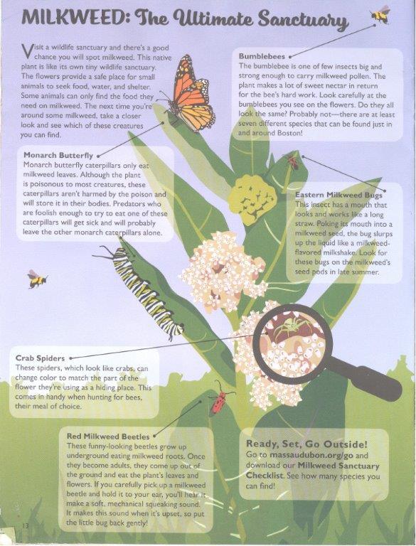 audubon milkweed ecology 001