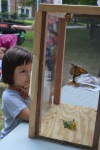 A close observation of a Monarch before it is released into the wild