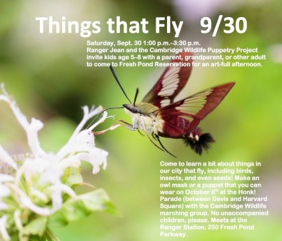 Things That Fly for email and web pdf (1)