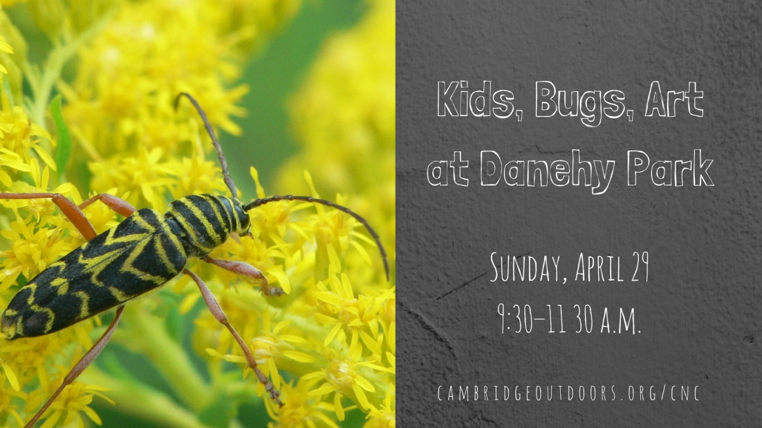Kids, Bugs, Art at Danehy Facebook Event