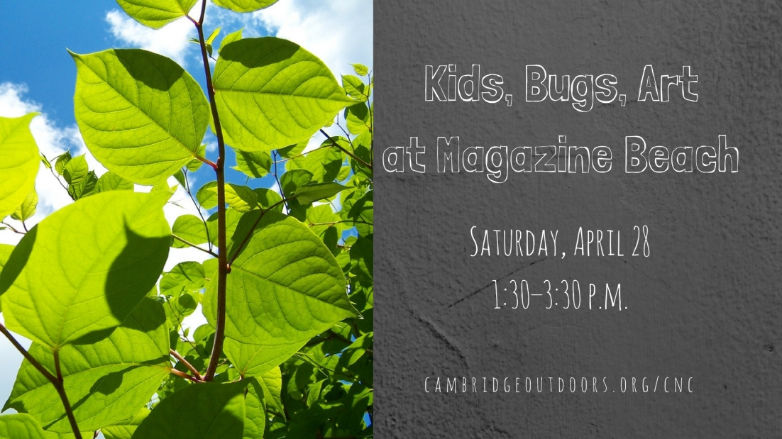 Kids, Bugs, Art at MB Facebook Event